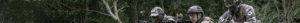 Tige de la plante - Biome